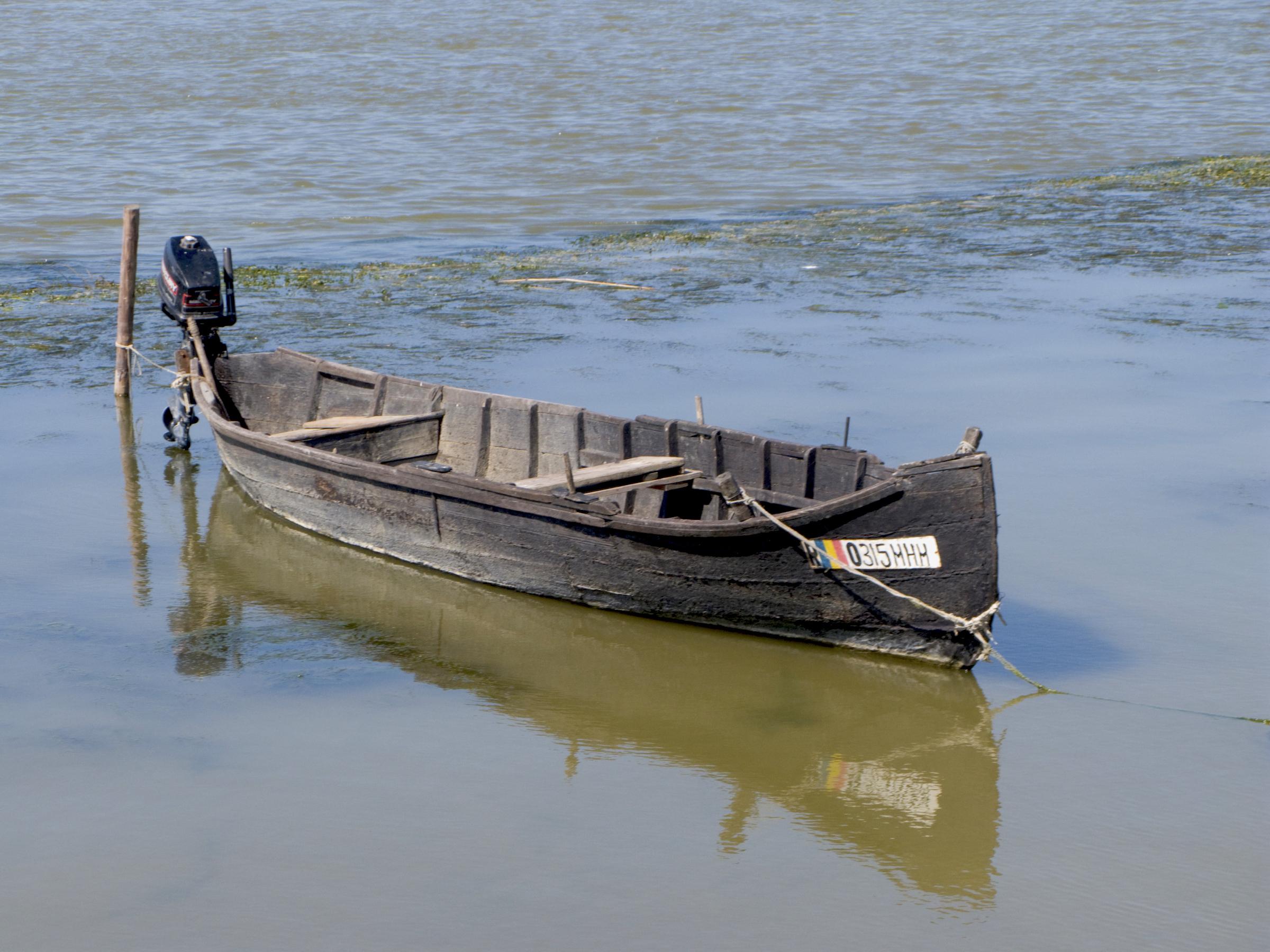 Delta Dunării, 2008